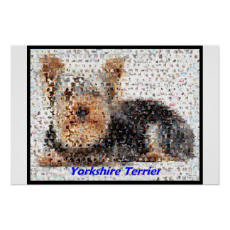 Yorkshire Terrier Montage Poster