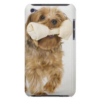 Yorkshire Terrier on white background walking Barely There iPod Cover