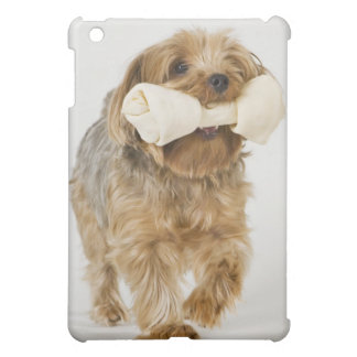 Yorkshire Terrier on white background walking iPad Mini Covers