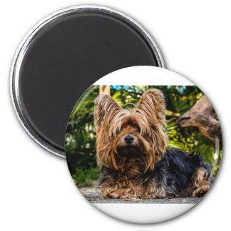 Yorkshire Terrier Pet Dog Magnet