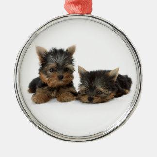 Yorkshire Terrier Puppies Premium Ornament