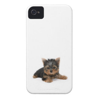 Yorkshire Terrier Puppy BlackBerry Bold Case
