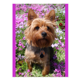 Yorkshire Terrier Puppy Dog Blank Purple Postcard