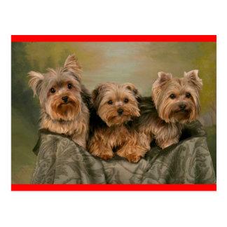 Yorkshire Terrier Puppy Dog Greeting Postcard