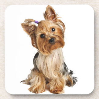 Yorkshire Terrier Puppy Drink Coasters