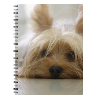 yorkshire terrier puppy pet cute dog face eyes spiral notebook