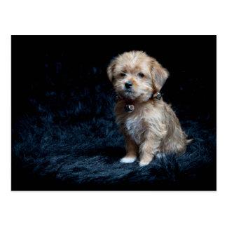 Yorkshire Terrier Puppy Postcard