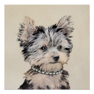 Yorkshire Terrier Puppy Poster