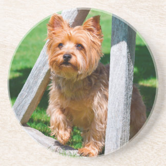Yorkshire Terrier standing in a wagon wheel Beverage Coasters