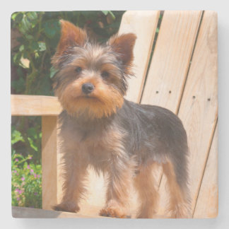 Yorkshire Terrier standing on wooden chair Stone Beverage Coaster