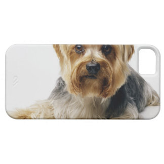 Yorkshire terrier wearing red bows iPhone 5 case