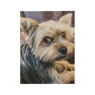 Yorkshire Terrier Wood Poster