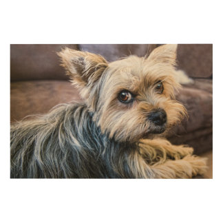 Yorkshire Terrier Wood Wall Art