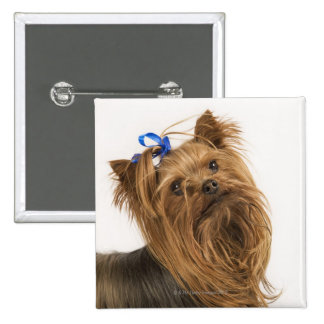 Yorkshire Terrier / Yorkie. Lively breed of 15 Cm Square Badge