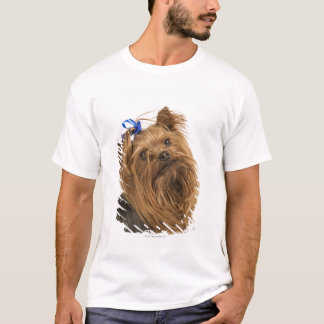 Yorkshire Terrier / Yorkie. Lively breed of T-Shirt