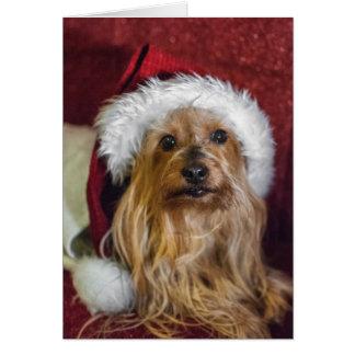 Yorkshire (yorkie) / Silky Terrier Christmas Card