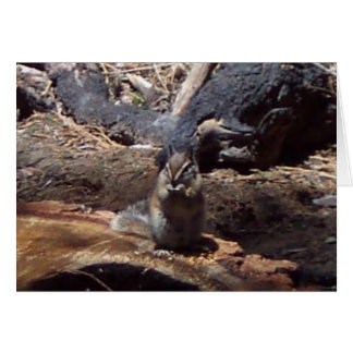 Yosemite in Spring:  A Furry Friend Card