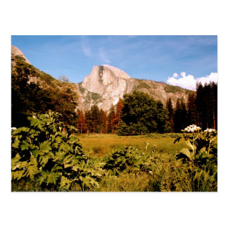 Yosemite National Park California Postcard