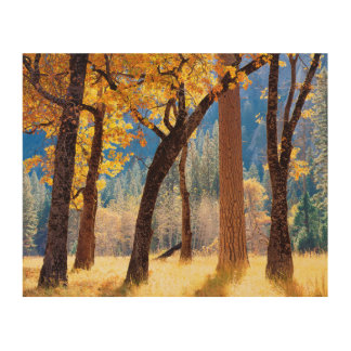 Yosemite National Park Wood Prints