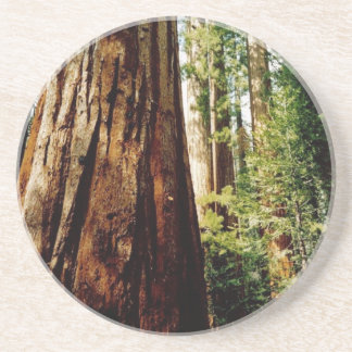 Yosemite Redwoods Beverage Coaster