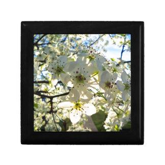 Yoshino Cherry Tree Blossoms Gift Box