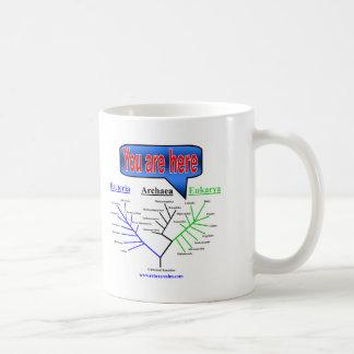 """You Are Here"" Evolutionary Tree Basic White Mug"