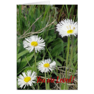 You are Loved Sub-alpine Daisy Blank Card