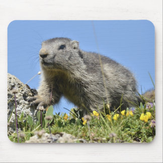 Young Alpine marmot Mouse Pad