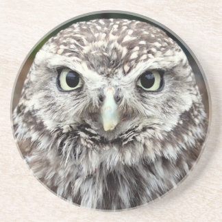Young Barred Owl Coasters