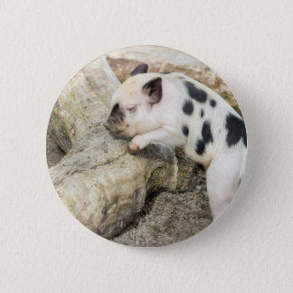 Young black and white piglet at tree trunk 6 cm round badge