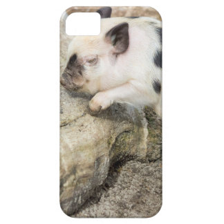 Young black and white piglet at tree trunk barely there iPhone 5 case