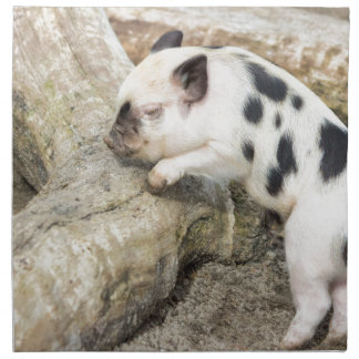 Young black and white piglet at tree trunk napkin