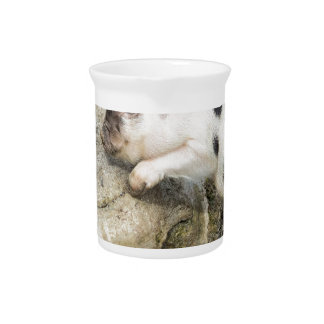 Young black and white piglet at tree trunk pitcher