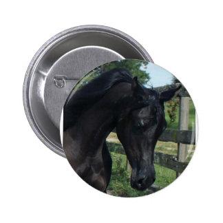 Young Black Arabian Stallion Pins