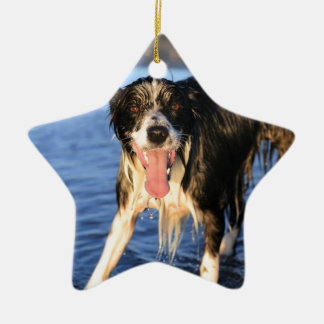 Young border collie dog on beach ceramic ornament
