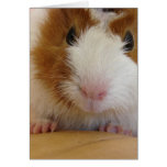 Young Brown and White Guinea Pig on Pumpkin Greeting Card