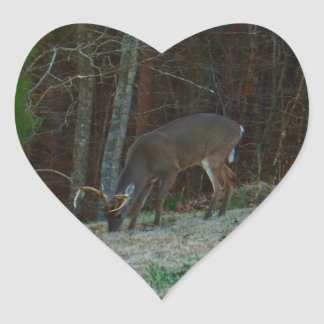 Young Buck Stag Deer Feeding Heart Sticker