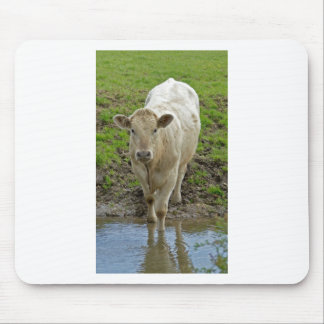 Young Bull at Water Hole Mouse Mats