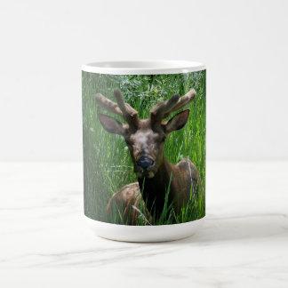Young Bull Elk Mug