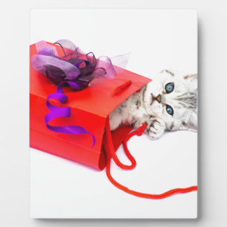 Young cat lying in red bag with decoration display plaques