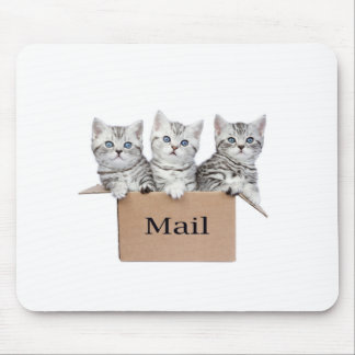 Young cats in cardboard box with word Mail Mouse Pad