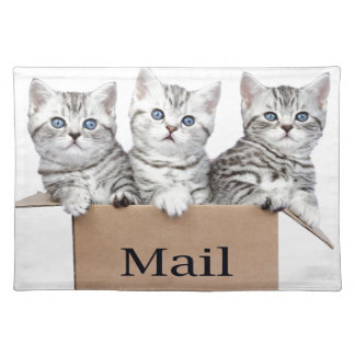 Young cats in cardboard box with word Mail Placemat