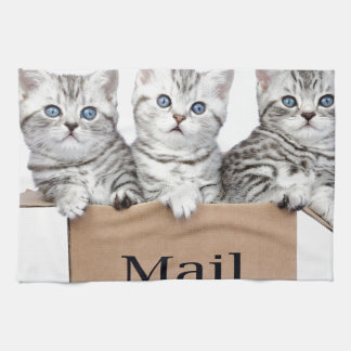 Young cats in cardboard box with word Mail Tea Towel