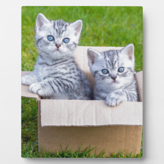 Young cats in cartboard box on grass plaques