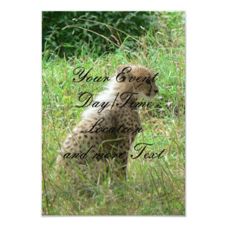 young cheetah 9 cm x 13 cm invitation card