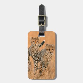 Young Cheetahs (Acinonyx Jubatus) Running Luggage Tag