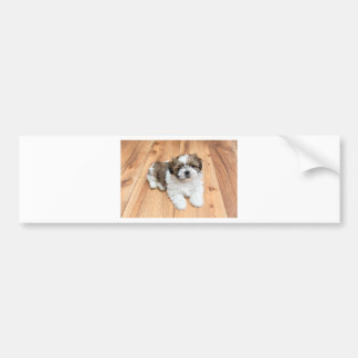 Young Chi Chu dog lying on parquet floor Bumper Sticker