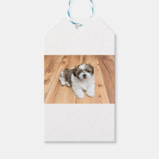 Young Chi Chu dog lying on parquet floor Gift Tags