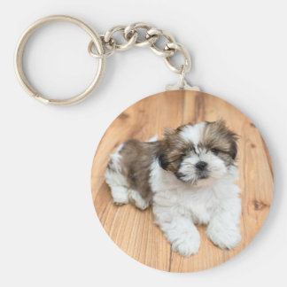 Young Chi Chu dog lying on parquet floor Key Ring