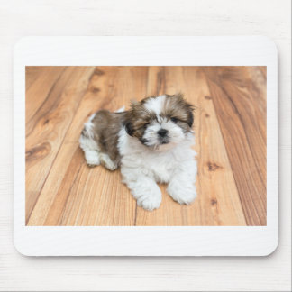 Young Chi Chu dog lying on parquet floor Mouse Pad